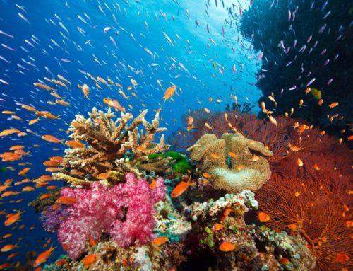 Tiefendruckfotografie – neues Motiv Korallenriff